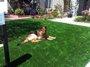 Piso Modular em Grama para Pets - m²